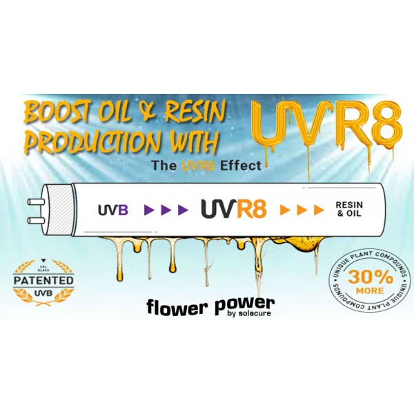 SOLACURE FULL FIXTURE UVR8 FLOWER POWER-BOOST OIL PRODUCTION