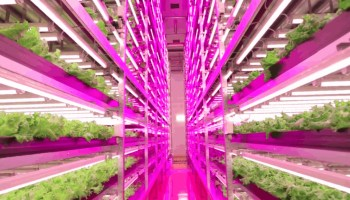 Wide angle and cool propagation lighting increases efficiency in photosynthesis of plants thus maximises yields. View our range of market-leading brands today!
